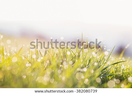 Morning dew drops on blades of green grass, sunrise - stock photo