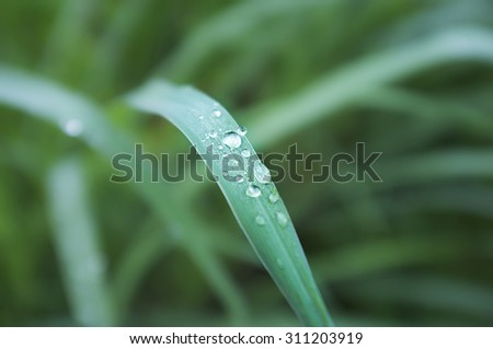 Morning Dew drops on the grass. Shallow depth of field