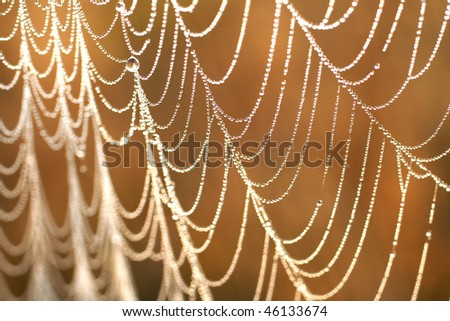 Morning dew on a web - stock photo