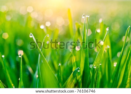Morning dew on blades of grass during sunrise - stock photo