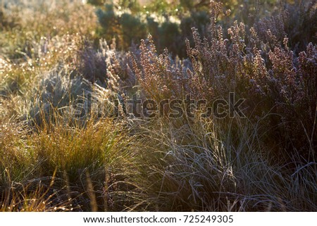 Morning dew on the grass and heather. Autumn. Nature background.
