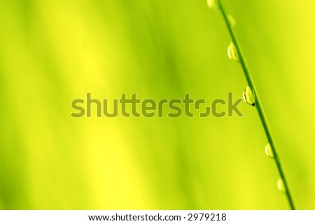 Morning dew over colorfull background