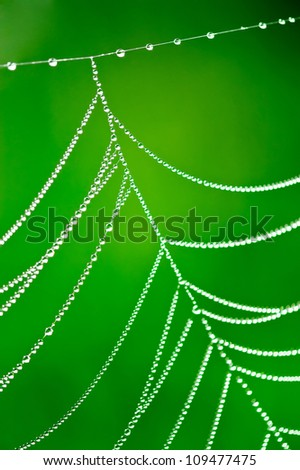 Morning dew. Shining water drops on spiderweb over green nature background. Shallow depth of field - stock photo