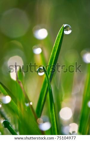 Morning drops - stock photo