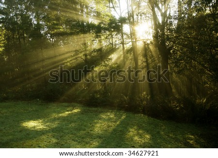 Morning early sunlight through foggy forest_02