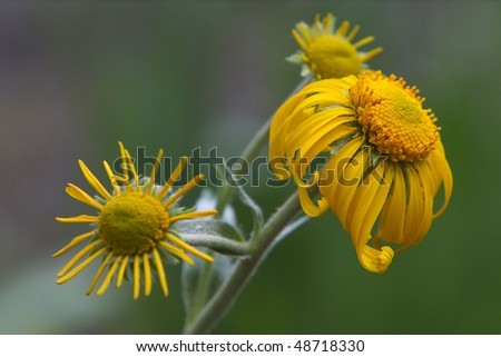Morning flower - stock photo