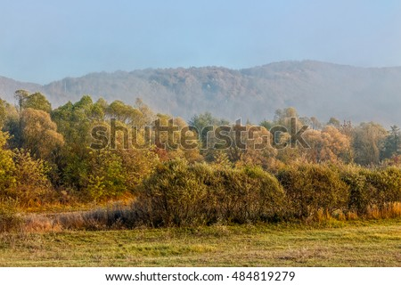 morning fog among trees on meadow at the foot of the mountain