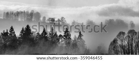 morning fog and a forest - stock photo