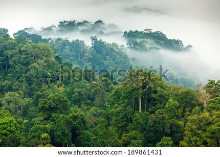 Morning fog in a wild tropical rainforest in Kaeng Krachan national park, Thailand - stock photo
