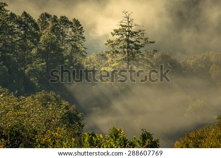 Morning fog in dense tropical rainforest, Chiang Dao, Thailand - stock photo
