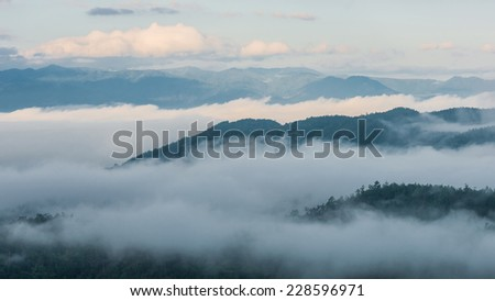 Morning fog in dense tropical rainforest, Misty mountain forest fog - stock photo