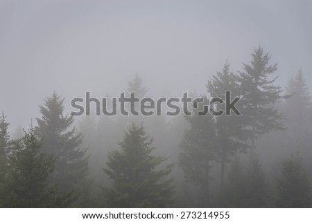 Morning fog in the Blue Ridge Mountains of North Carolina in the Spring - stock photo