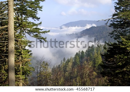 Morning Fog Newfound Gap in the Great Smoky Mountains National Park in Spring Horizontal - stock photo