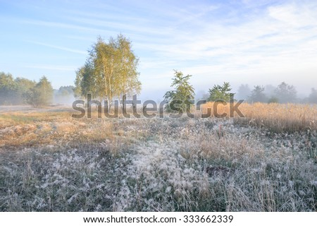 morning fog over a meadow, nature series - stock photo