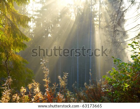 Morning forest - stock photo