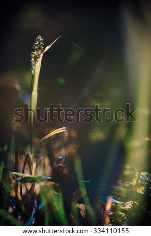 Morning in city park.The first beams of the sun make the way through dense foliage of trees lighting a grass.Selective focus. - stock photo