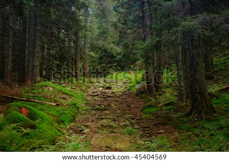morning in forest - stock photo