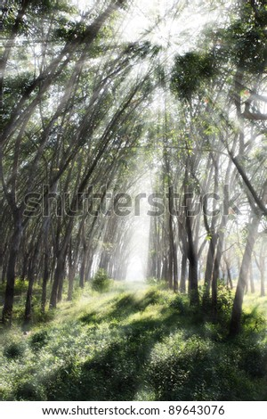 Morning in forest with beam of the sun. - stock photo
