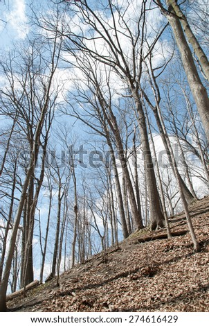Morning in Spring Forest. Thicket. - stock photo