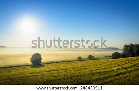 morning in the field with sun shining through the mist - stock photo