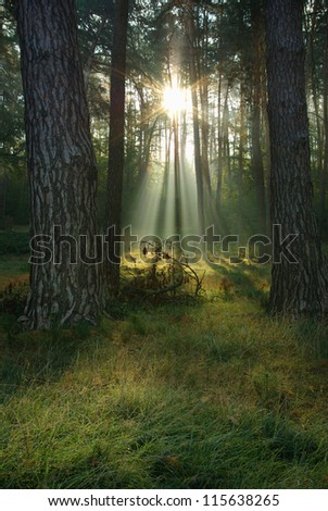 morning in the forest landscape. sunlight shining through the trees - stock photo