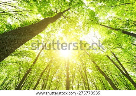 Morning in the green forest at summer - stock photo