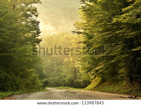 Morning in the relict caucasian mountain forest in summer - stock photo