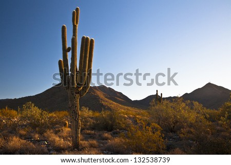 Morning in the Sonoran Desert