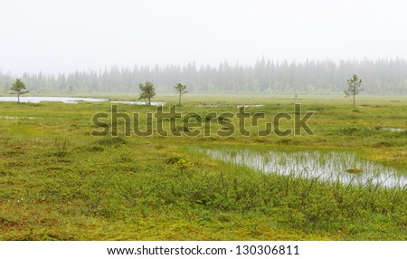 Morning in the swamp - stock photo
