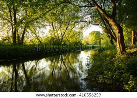 Morning in the wild garlic forest - stock photo
