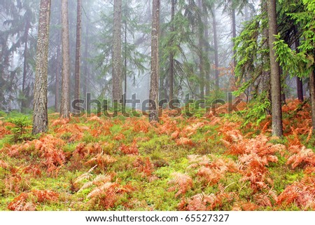Morning in the wood - stock photo