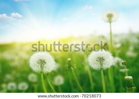Morning landscape. - stock photo