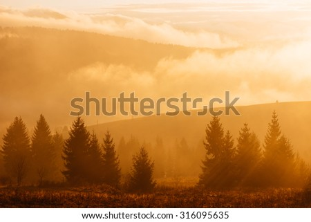 Morning landscape with a colorful sunrise. Spruce forest in the hills. The first rays of the sun in the fog. Color toning - stock photo