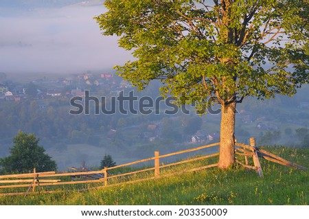 Morning landscape with lonely tree and fence in a mountain village. Carpathians, Ukraine, Europe - stock photo