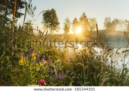 Morning light and wild flowers in north Poland. Pomerania district/Morning light and wild flowers - stock photo