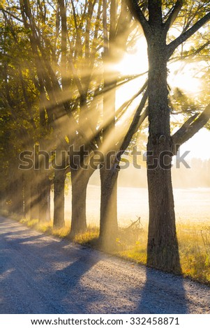 Morning light falls on the road and trees at the Fall - stock photo