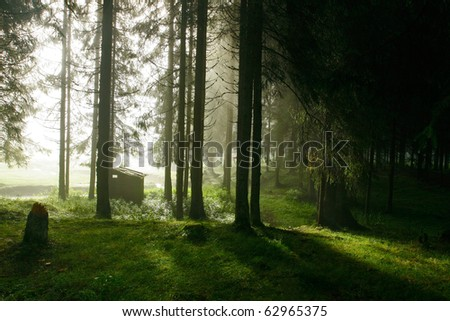 Morning light forest contrast - stock photo