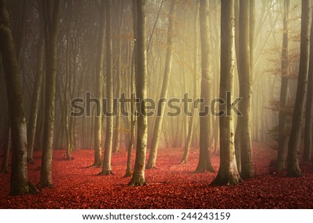Morning light in enchanted forest - stock photo