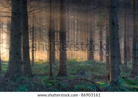 Morning light in the woods,light spots on moss - stock photo
