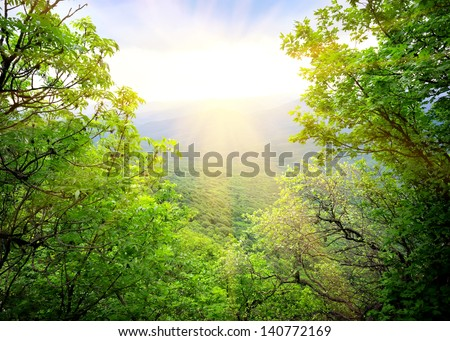 Morning light of the sun makes its way through the forest - stock photo
