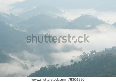 morning mist cover tree and mountain - stock photo