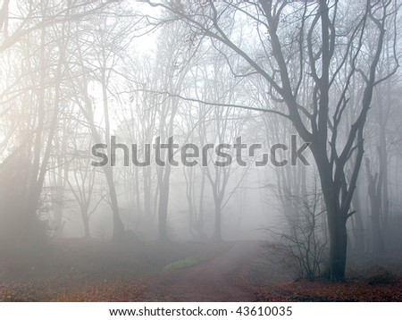 Morning mist in Epping Forest