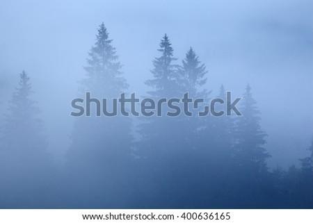 Morning mist in mountain. - stock photo
