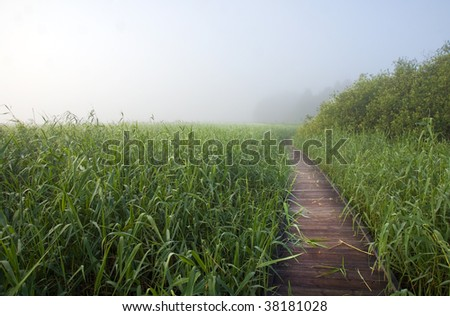 Morning mist over a footpath in a swamp area with reeds - stock photo