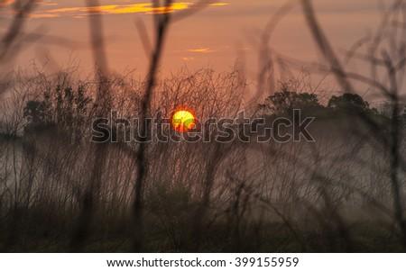 Morning Mist prairie grass  - stock photo
