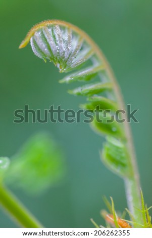 morning nature background with beautiful dew drops close up