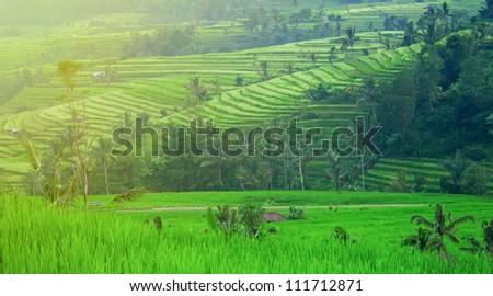 Morning on rice terrace. Beautiful sunrise on the green rice paddy field. - stock photo
