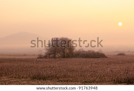 Morning on the field with tree,sun and fog - stock photo