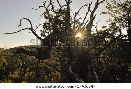 Morning on the mountain - stock photo