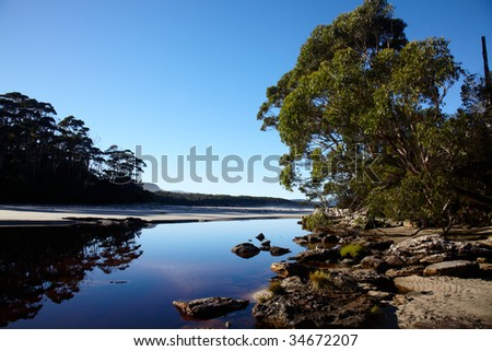 Morning on wild Tasmanian river in eucalyptus forest - stock photo